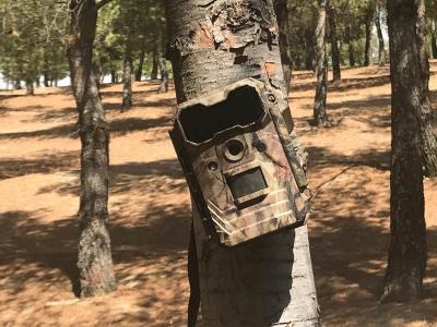 Camara de caza colocada mal