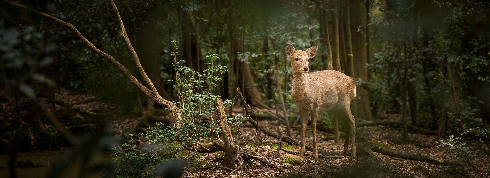 caza trailcamp zorro