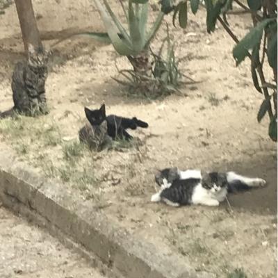 Gatos holgazaneando con camara de caza