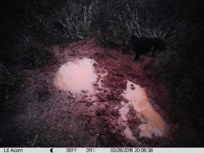 Foto de camara de caza con objetivo gran angular